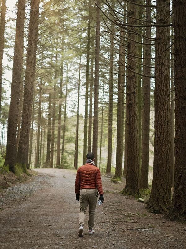 Wandelen in de bossen